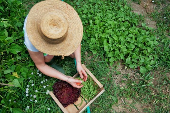 Le principe du jardin autofertile